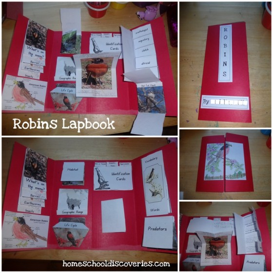 Robins Lapbook 2013